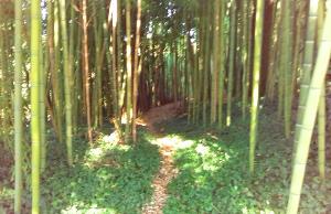 Chemin dans le jardin de bambou